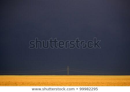 後ろ 電源 塔 麦畑 フィールド 旅行 ストックフォト © pictureguy