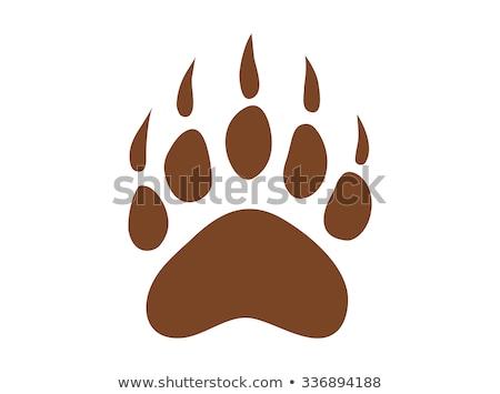 footprint bear  in the wood Stock photo © adrenalina