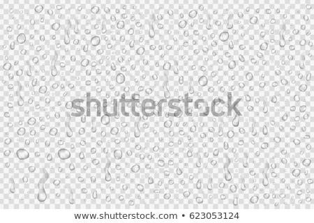 água gotículas macro gota de água isolado Foto stock © claudiodivizia