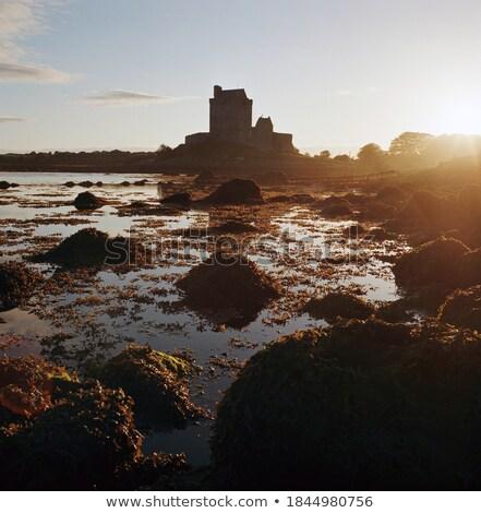 農村 · アイルランド · 豊かな · 緑 · 石 - ストックフォト © is2