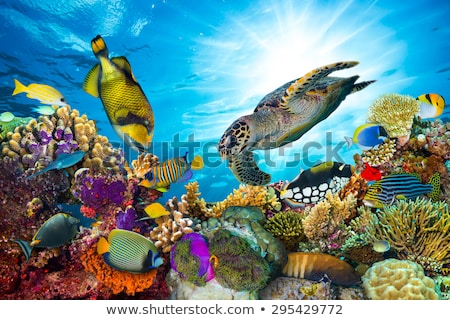 Sea turtle and many fish at tropical reef under water Stock photo © Kzenon