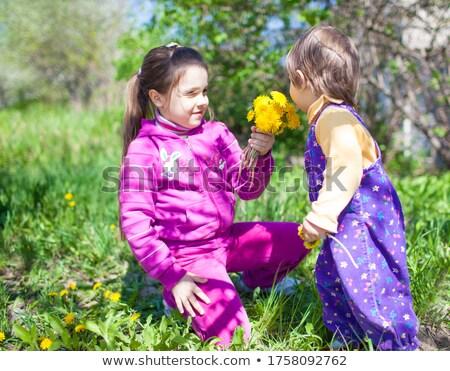 Little girl sessão grama cheiro dandelion primavera Foto stock © goce