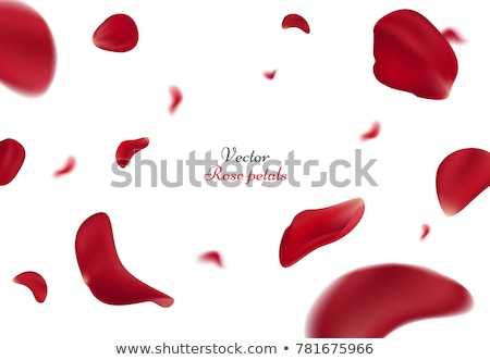 happy st valentines day greeting card with falling red rose petals vector illustration with beaut stock photo © marysan