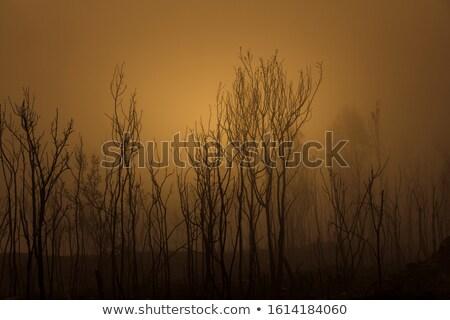 Getrocknet Baum Nebel stehen Nebel Wolken Stock foto © szefei