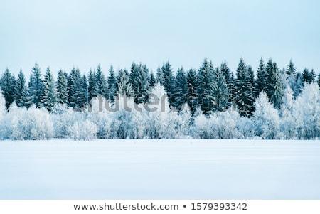 電気 ポール 冬 風景 電源 ポスト ストックフォト © vichie81