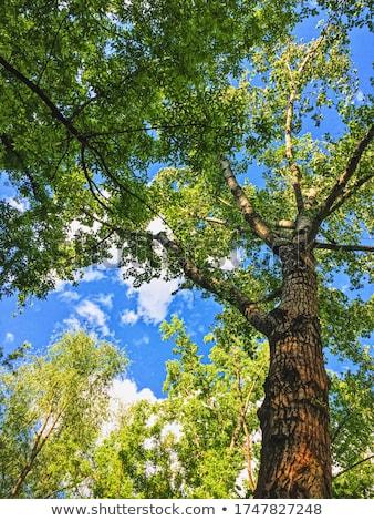 лесу удивительный деревья зеленый Сток-фото © Anneleven