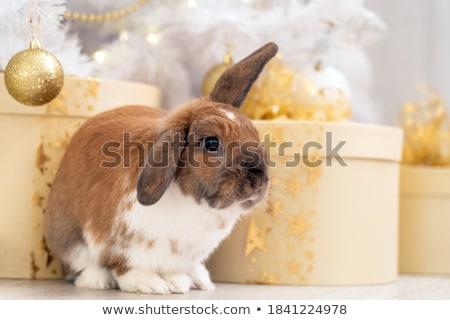 Tavşan hediye yılbaşı oturma kutu Stok fotoğraf © Lynx_aqua