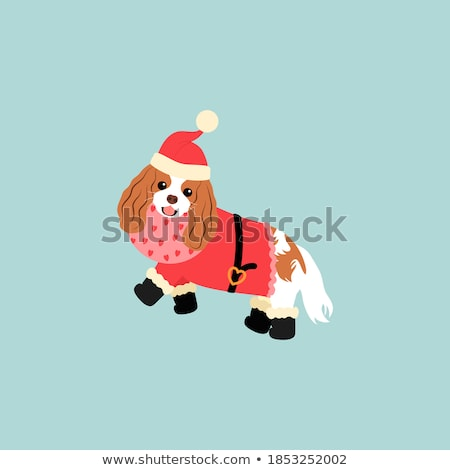 Cavalier King Charles Spaniel in Santa Hat Stock photo © dnsphotography