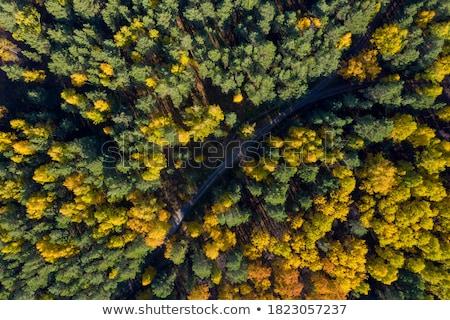 Erdő fenyőfa eltorzult halszem lencse természet Stock fotó © alexeys