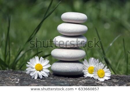 цветок сбалансированный камней избирательный подход Сток-фото © REDPIXEL