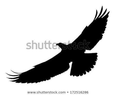 sziluett · háttér · madár · fekete · szabadság · fehér - stock fotó © perysty