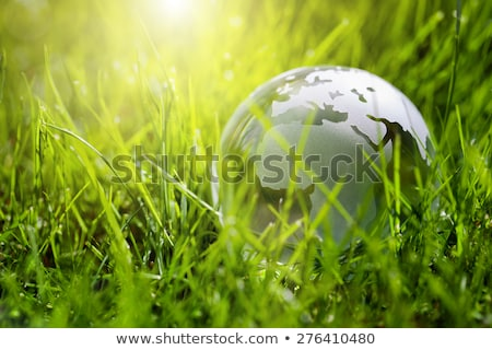 Environment concept, glass globe in the leaf Stock photo © arcoss
