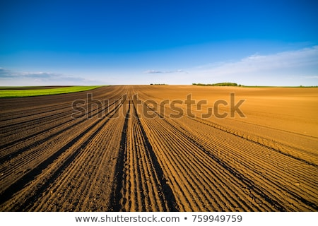 Arable land Stock photo © stevanovicigor