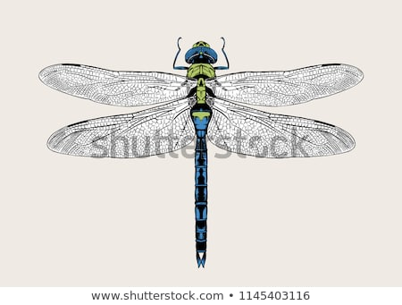 libélula · verde · azul · animal - foto stock © chris2766