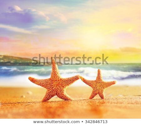 Dois starfish laranja sorridente faces cara Foto stock © Frankljr