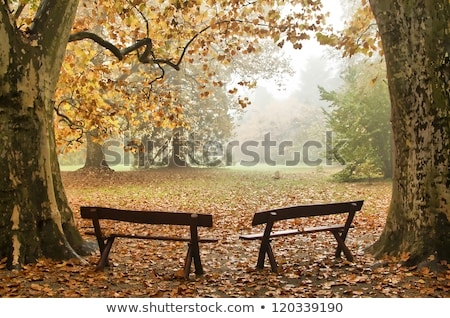old two benches in an urban park stock photo © shihina