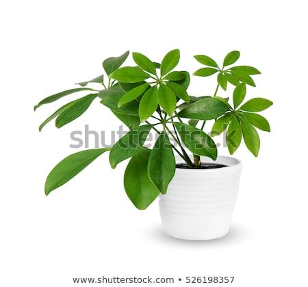 植物 春 太陽 自然 光 地球 ストックフォト © feelphotoart