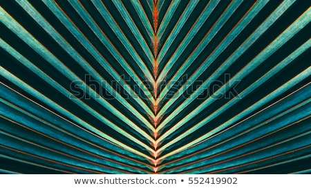 lines and textures of green palm leaves stock photo © meinzahn