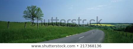 árvore Bélgica paisagem blue sky branco nuvens Foto stock © compuinfoto
