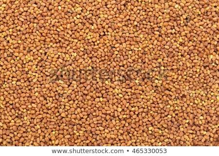 andrographis paniculata seeds or kalmegh stock photo © ziprashantzi