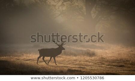 laranja · madrugada · luz · solar · cinza · abaixo - foto stock © silkenphotography