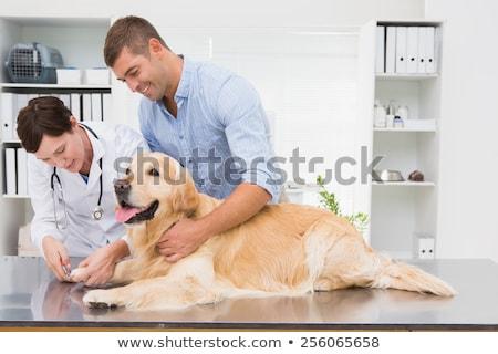Stok fotoğraf: Veteriner · köpek · sahip · tıbbi · ofis
