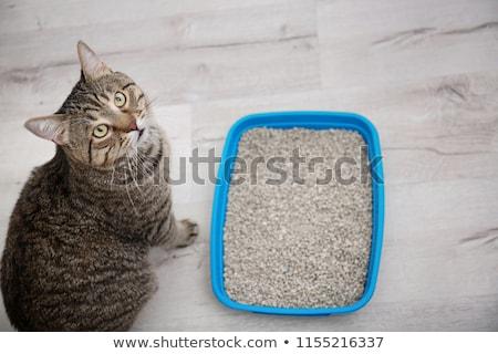 caixa · azul · gato · areia · cuidar · recipiente - foto stock © cynoclub