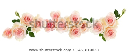 gentle pink flowers border   isolated stock photo © taiga