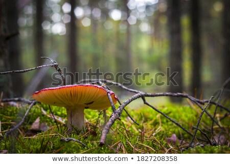 Güzel yosun ahşap büyümek yeşil orman Stok fotoğraf © romvo