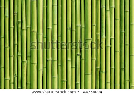 Green bamboo fence Stock photo © bluering