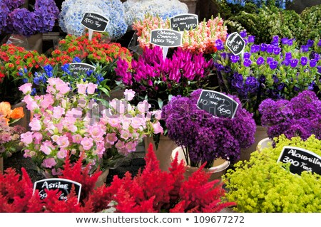 flowers for sale   flower market stock photo © kidza
