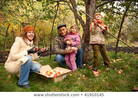 Anne çocuk hasat elma ağaç çalışma Stok fotoğraf © Kzenon