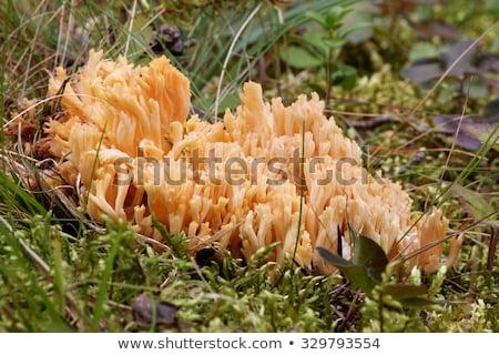Funghi legno crescita muschio foresta bella Foto d'archivio © romvo