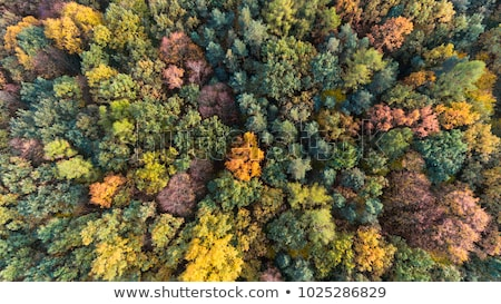 Aerial view of autumn park trees Stock photo © stevanovicigor
