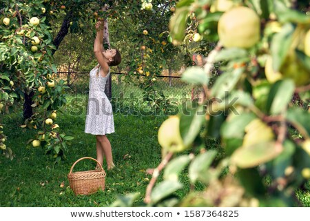 Young girl picking apple Stock photo © IS2