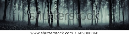 A Dark Mystery Forest Stock photo © bluering