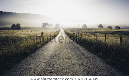 rural · carretera · solar · tarde · cielo · árbol - foto stock © Pozn