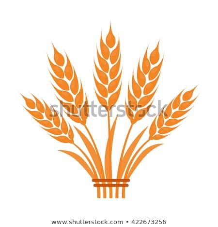 Stock fotó: Búza · rajz · ikonok · pékség · kenyér · bolt