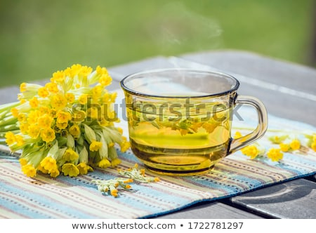 A cup of herbal tea with fresh primula flowers Stock photo © madeleine_steinbach