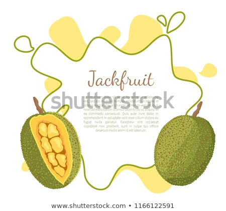 Jackfruit Exotic Juicy Stone Fruit Vector Poster Stock photo © robuart