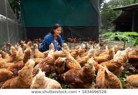 Dieren boerderij scène dier organisch vlees Stockfoto © makyzz