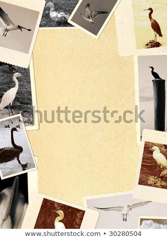 Photo frame illustrazione sfondo frame arte uccello Foto d'archivio © bluering