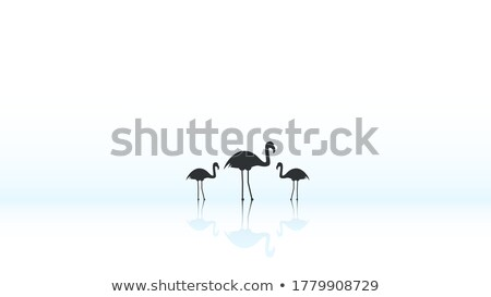 Silhouette scene with flamingo in the field stock photo © colematt