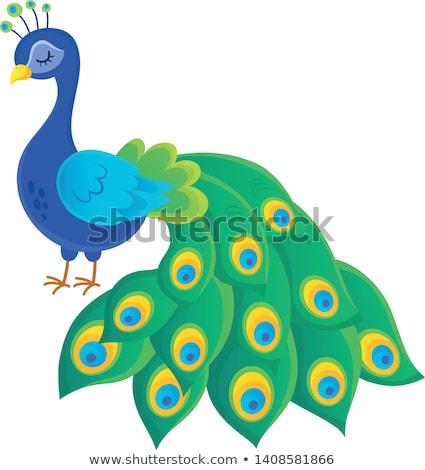 定型化された 孔雀 トピック 画像 羽毛 色 ストックフォト © clairev