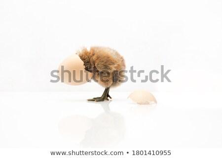 Chick ei natuur illustratie hemel achtergrond Stockfoto © bluering