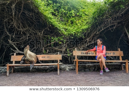 Galapagos tourist sitting on bench with sea lion and iguana on Isabela Island Stock photo © Maridav