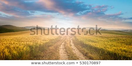 Idilli mező út tavasz idő déli Stock fotó © prill