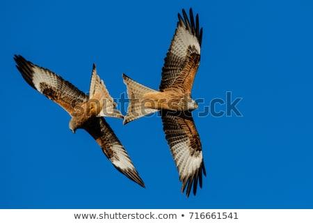 piros · papírsárkány · repülés · madár · kék · toll - stock fotó © lightpoet