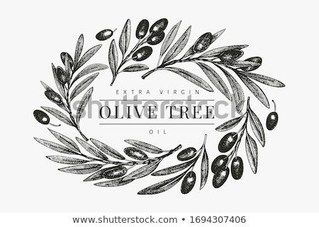 Rolniczy świeże drzewo oliwne oddziału banner wektora Zdjęcia stock © pikepicture