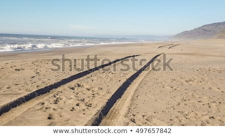 шин песок подробность влажный пляж Сток-фото © fxegs